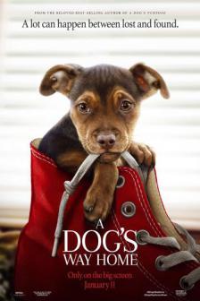 A Dog's Way Home - เพื่อนรักผจญภัยสี่ร้อยไมล์